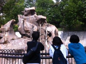サルはどれだけ眺めていても飽きません。